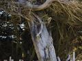 I am a tree...