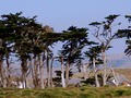 Pt. Reyes, CA :: July 2008